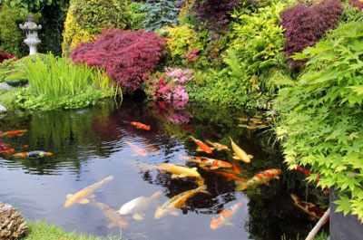 Fauna para los jardines acuaticos