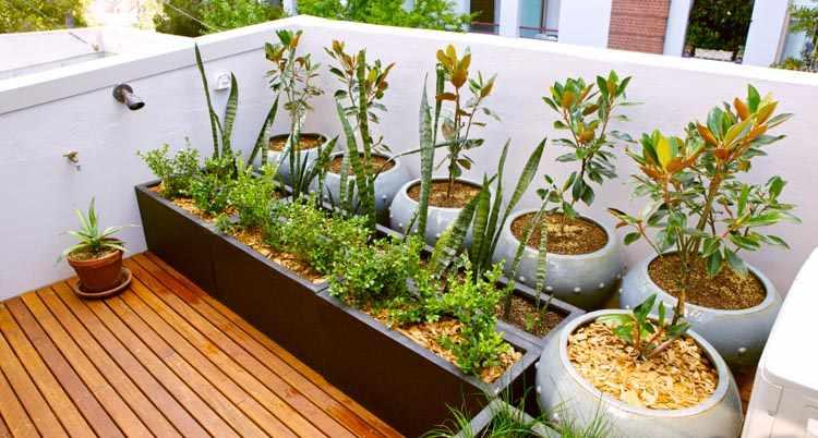 jardineria para balcones