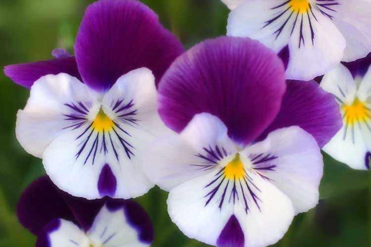 Flores para el jardin de invierno