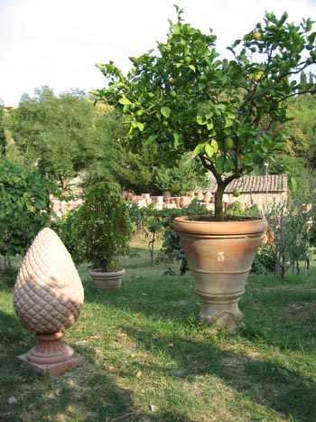 como plantar arboles frutales en macetas
