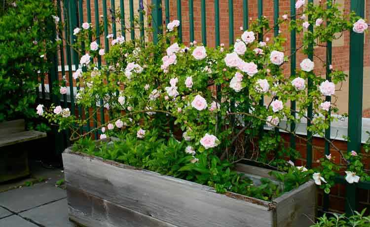 consejos de jardineria en macetas para principiantes