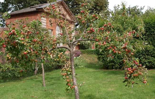 donde plantar arboles frutales