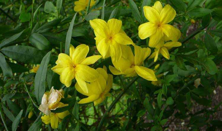 flores de invierno para jardín