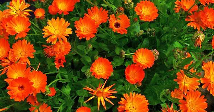 flores para el jardin en invierno