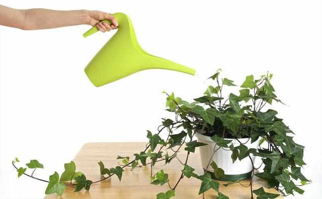 Como regar plantas en macetas