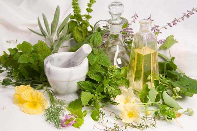 Hierbas medicinales y aromaticas para el jardin y la cocina