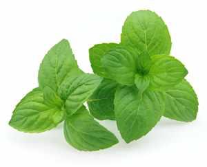 plantas medicinales de jardin