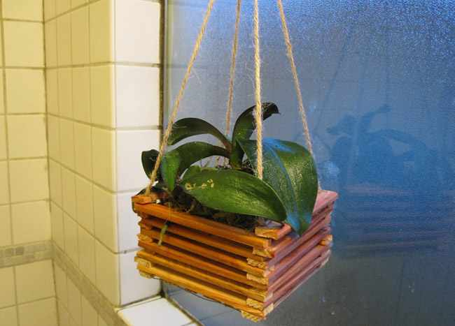 cestas colgantes de plantas