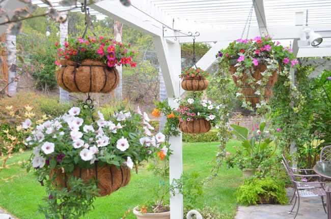 cestas colgantes para plantas