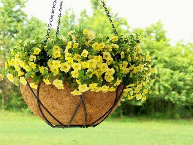 hacer cestas colgantes para plantas