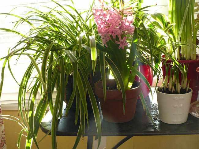 mis plantas crecen muy lento