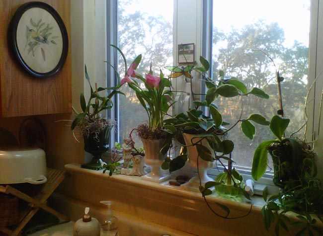 plantas interior para cocina