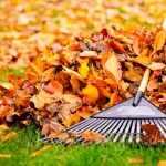 4 herramientas basicas de jardineria que debes tener