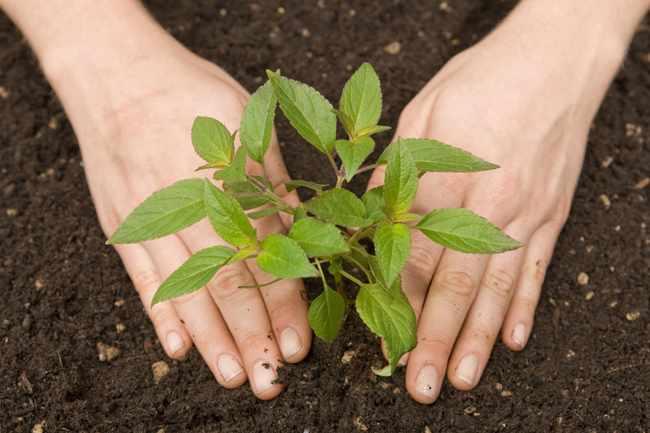 Abonos y fertilizantes diferencias