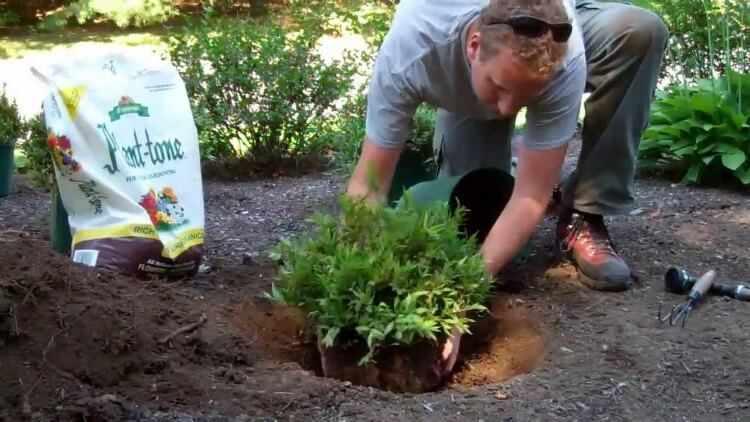 Como plantar arbustos