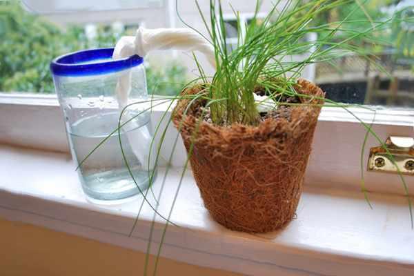 Conservar las plantas en vacaciones