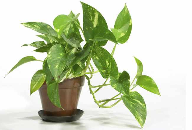 Plantas de interior resistentes