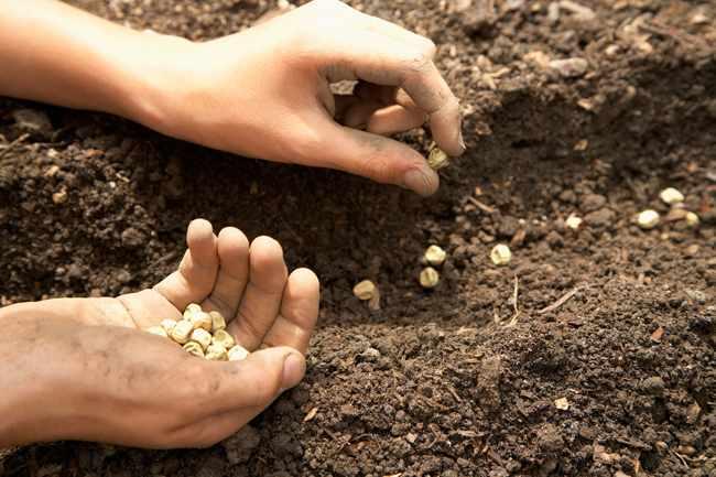 germinar semillas siembra de tomates calendario de siembra de hortalizas