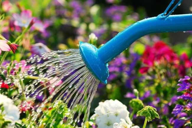 10 trucos faciles para regar las plantas menos y ahorrar agua