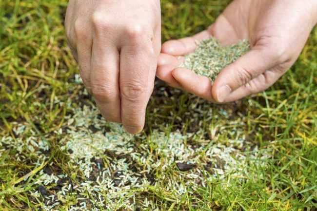 semillas de cesped para jardin