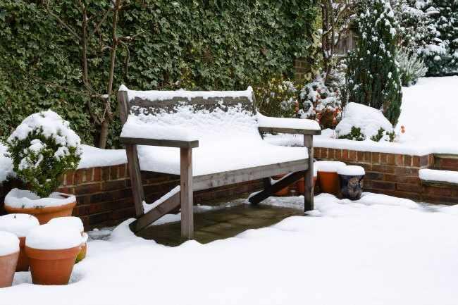 Como cuidar el jardin en invierno