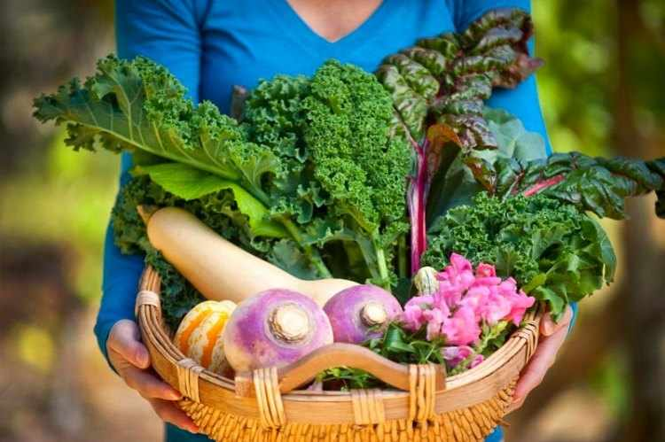 Hortalizas en macetas - Vegetales para cultivar en zonas sombrias