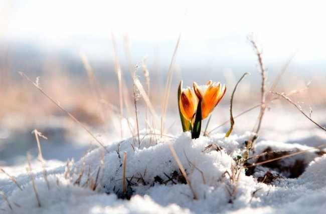 Plantas de invierno para jardin
