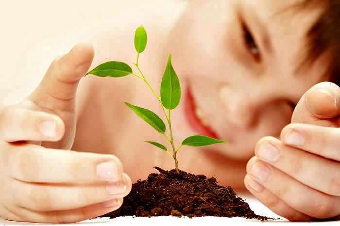 Siembra de plantas semillas y arbol
