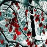Cuidados del jardin en invierno
