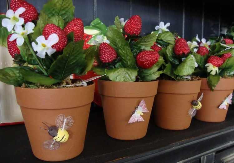 Cultivo de fresas, como plantar fresas en casa