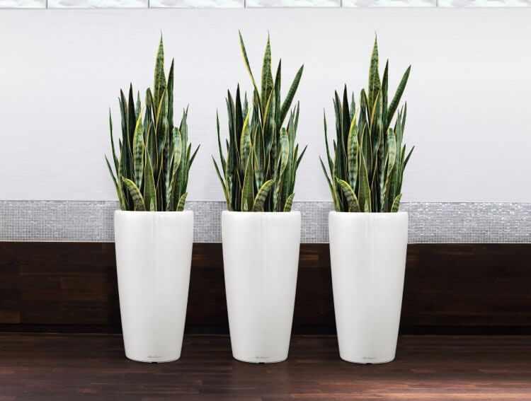 3 plantas de interior faciles de cuidar
