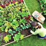 Cultivos de huerta. Tu huerto urbano en casa