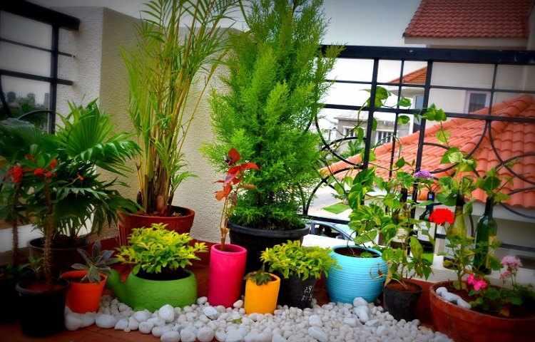 Plantas para balcones