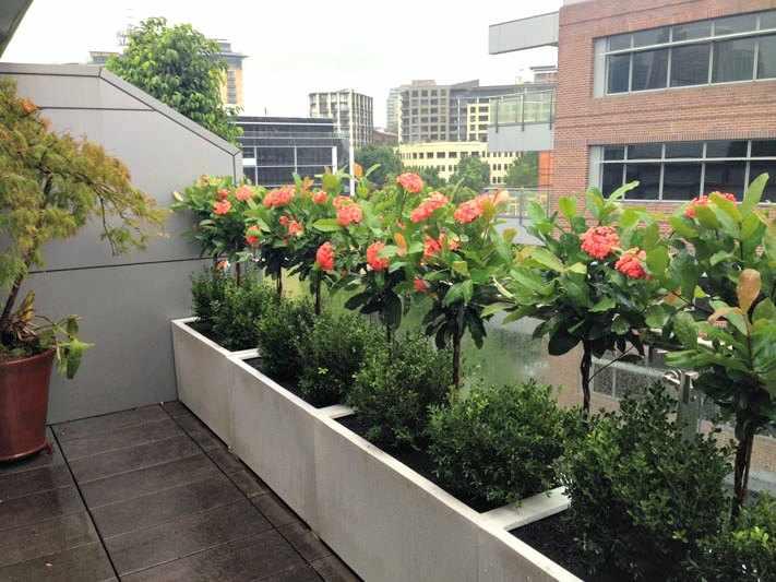 Plantas para balcones y terrazas exteriores for Arbustos para macetas exterior