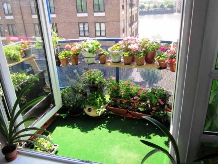 plantas con flores para balcones