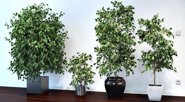 plantas faciles