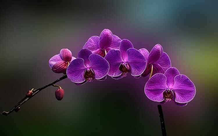 como cultivar orquidea