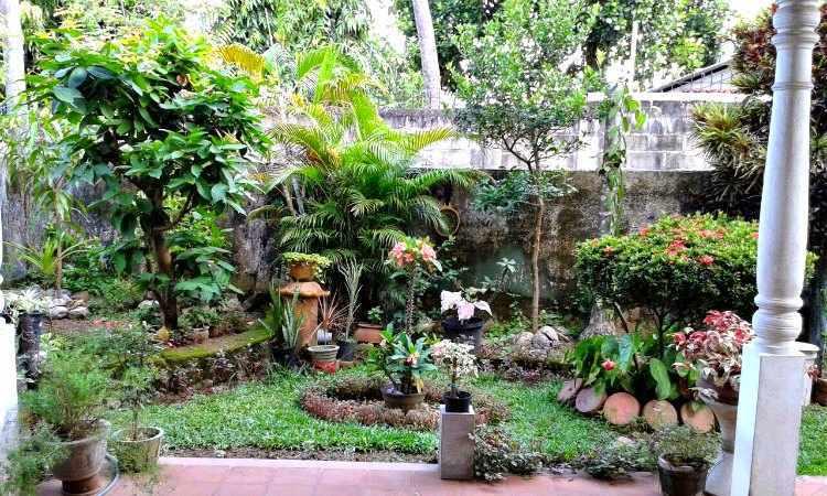 como mantener un jardin bonito