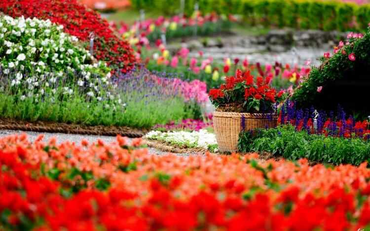 flores de jardin exterior