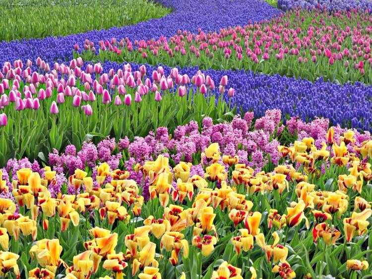 flores para jardin de sol