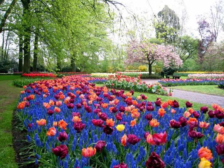flores para jardineras