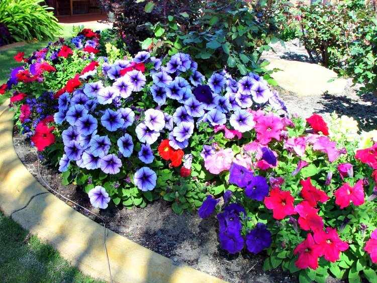 flores para jardines