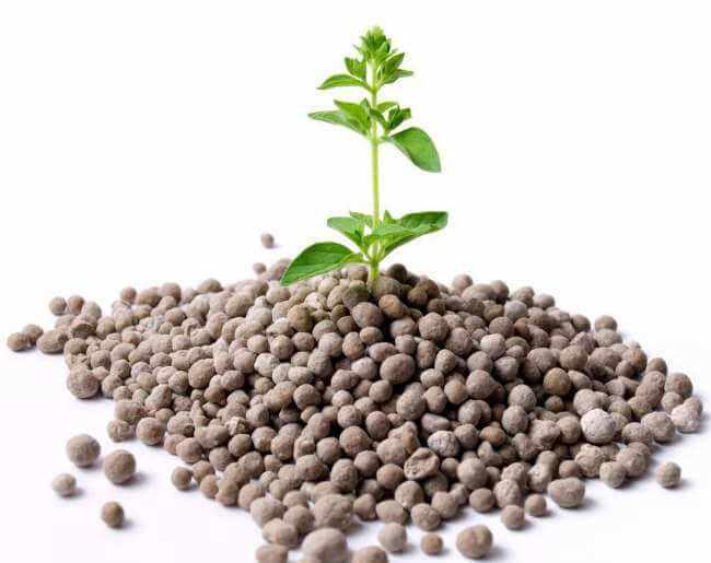 fosforo en las plantas funcion