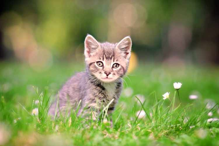 plantas de interior venenosas para gatos