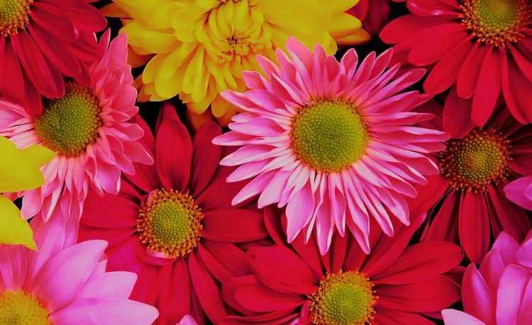 que flores se pueden plantar en otoño