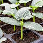 Tipos de tierra o sustratos para plantas