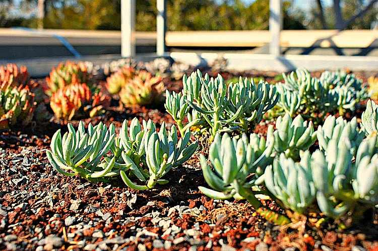 sustratos para plantas