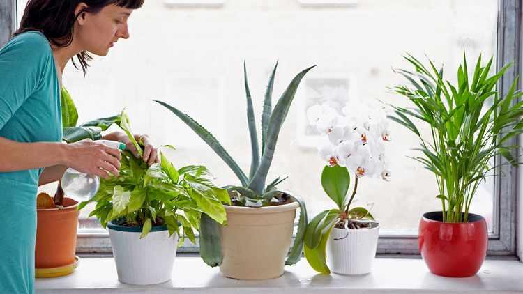 cuidado de plantas de interior