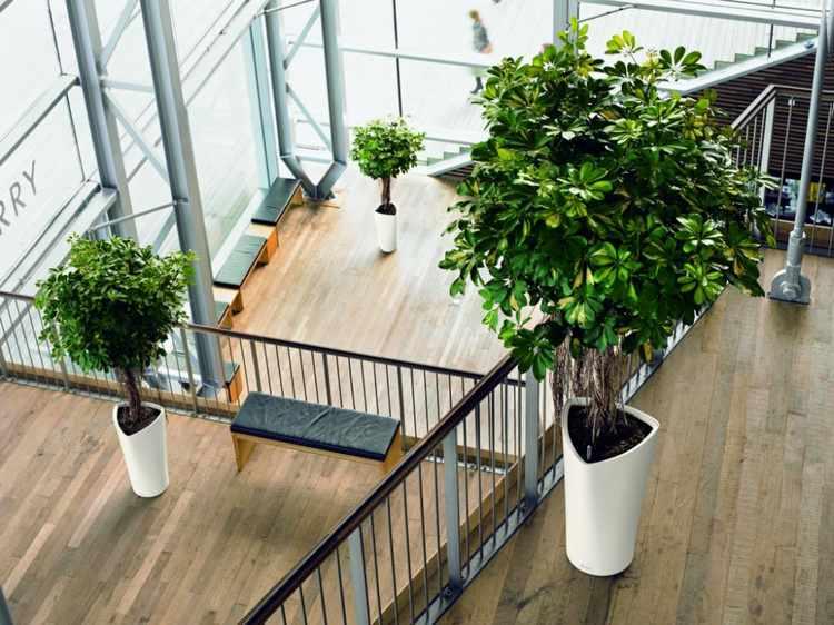 nombres de plantas de interior