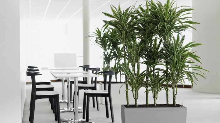 Plantas de interior tipos variedades cuidados y riego - Macetas para plantas de interior ...